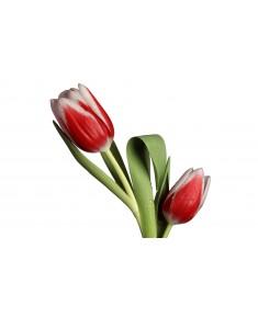 Тюльпан Краснодар, красный