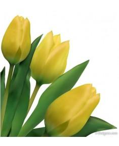 Тюльпан Краснодар, желтый