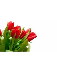 Тюльпан, Краснодар, красный