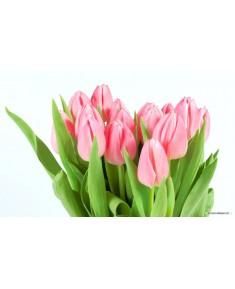 Тюльпан Краснодар, розовый